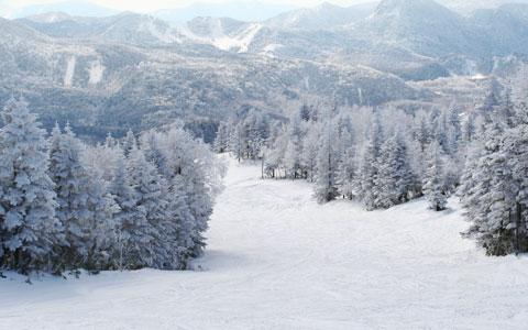 志賀高原めくり(焼額山スキー場) スノーボードのプライベートレッスンも... プライベートレッス